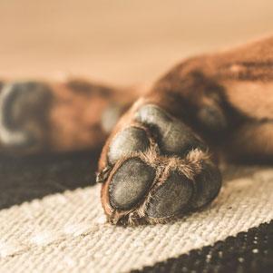 Tlapky psů potřebují vaši péči vzimě ilétě
