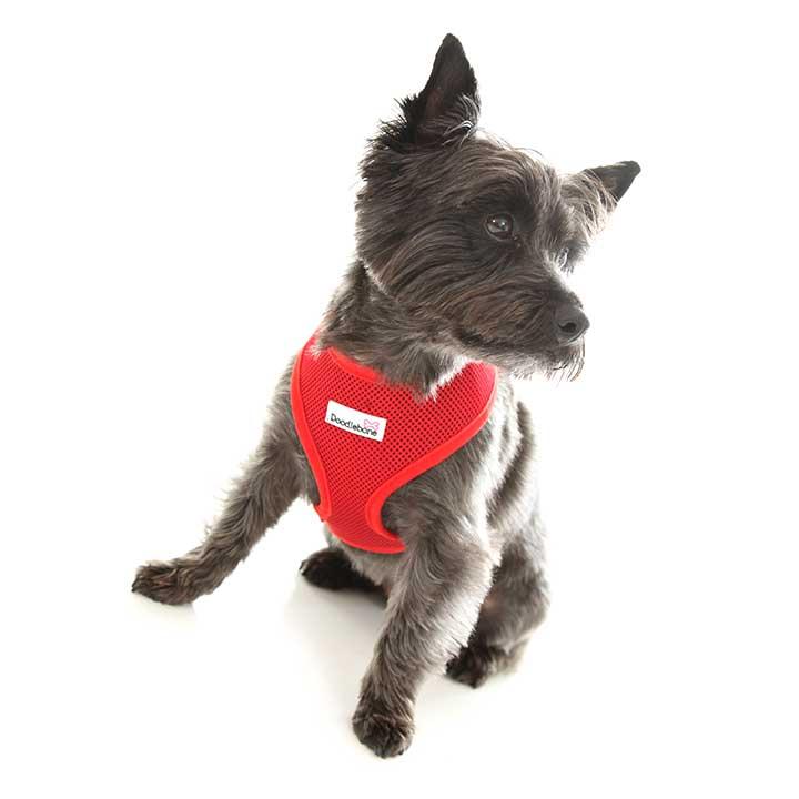 Postroj Airmesh Red pro psy pre psov Doodlebone